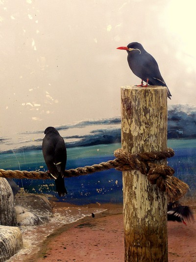 San Antonio Zoo Birds