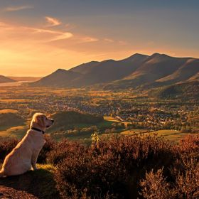 Golden Retriever surveying her land as the sunsets. Taken at Walla Crag overlooking Keswick. You have Bassentwaithe lake, Doods Wood, Skidaw, Lat...