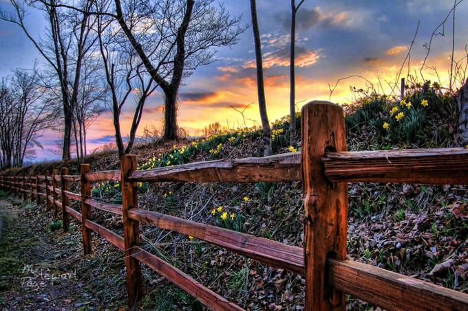 Spring Is On The Fence Again This Year by Melinda_Stewart_Page - Fences Photo Contest