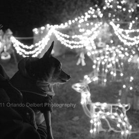 Julia and The Rocky Pachino enjoying the Christmas lights. 2011 Copyright Orlando Delbert Photography