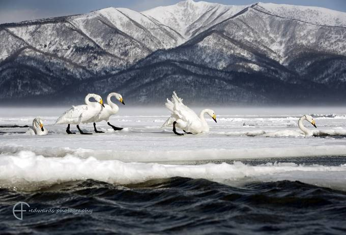 One more step along the world we go by elfiedwards - Celebrating Nature Photo Contest Vol 3