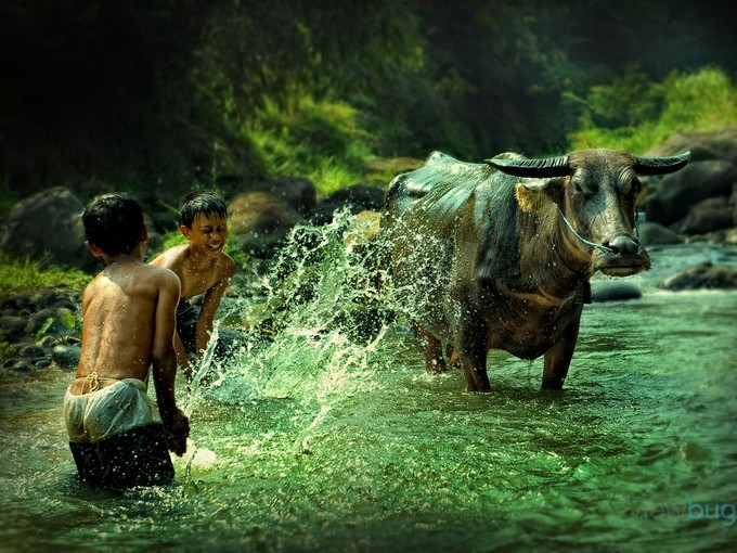 Anak Gembala by iwansoleiman - Children and Animals Photo Contest