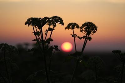 Norfolk sunset....