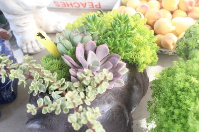 succulents at a market in Roanoke