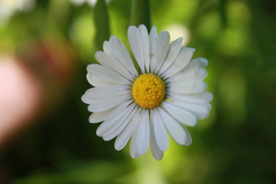 Took this pic when I had just gotten a macro-lens.  Not the whole lens, but a macro-thingy to scr...