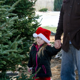 a child looks at christmas trees with her dad and casts a critical eye at the  choices