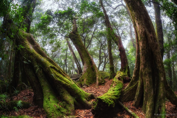 Tullawallal Trail 1 by TwoCatsPhotography - Divine Forests Photo Contest