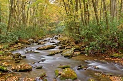 Raven Fork Creek