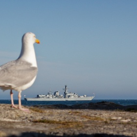 A Sea Gull seemingly watches and wonders at the arrival of a naval warship to the quiet Devon coast