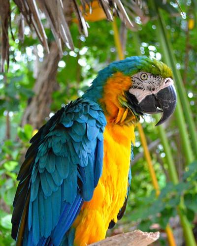 Birds of the Bahamas