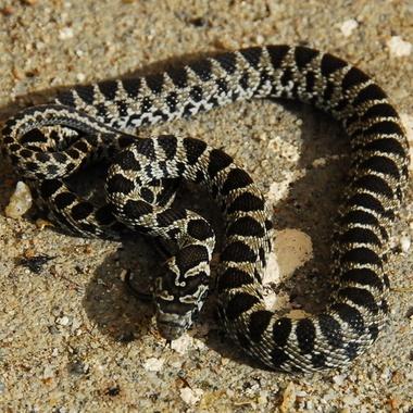 little snake in the garden