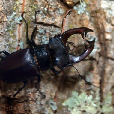 very big bug 11cm
