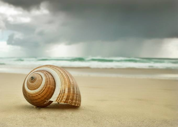 From a Shells View by LindaDLester - Clever Angles Photo Contest
