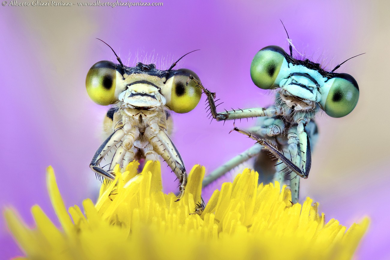 How I Took This Photo by Alberto Ghizzi Panizza