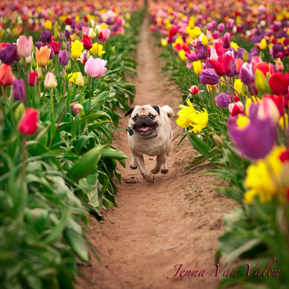 Wallace Refused to Tip Toe by JennaVee - Bright And Colorful Photo Contest