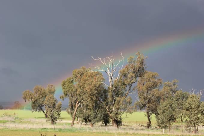 Rainbow by malcolmpretty