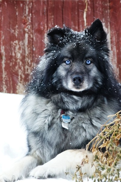 Blue in the snow storm
