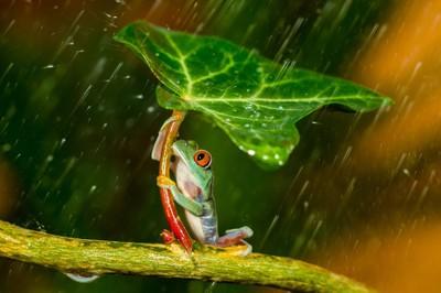 Ohh nooo... :( It's Raining