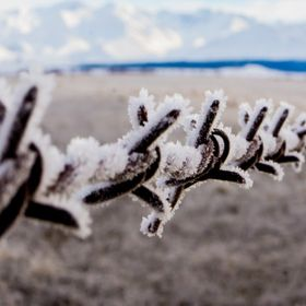 Frozen Spikes