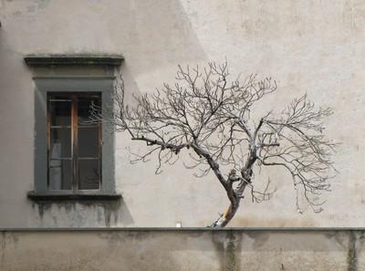tree in orvietto