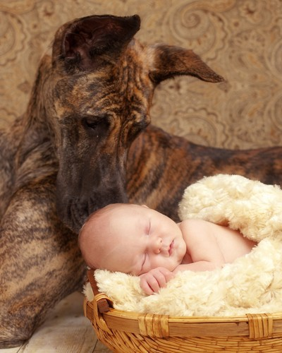 Baby with Great Dane