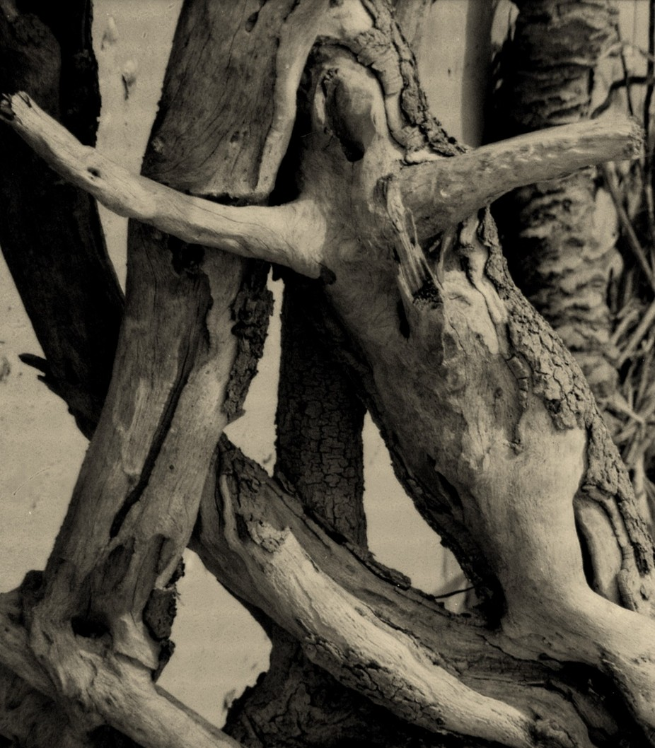 Spirit of The Cypress - Toppled Cypress tree exposed the image of a woman in the roots.