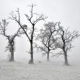 Wet snow covered trees in the midst of a winter fog.