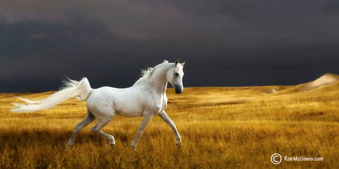 The Power And Grace Of Horses Photo Contest Winners