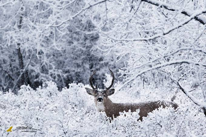 Winter Wonderland by michaelrowlandson - Depth In Nature Photo Contest
