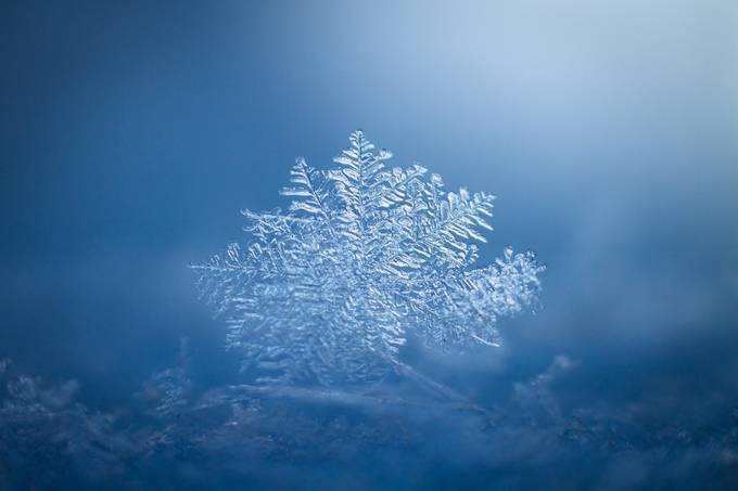snowflake by juliejamieson - A World Of Blue Photo Contest