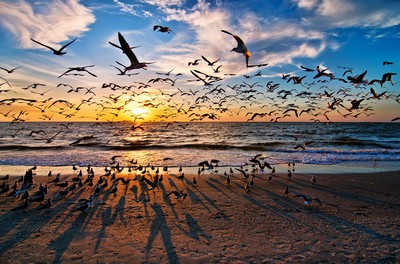 Flock Of Birds Photo Contest Finalists