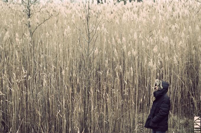Big Michigan Grasses by Dfreid - Dry Fields Photo Contest