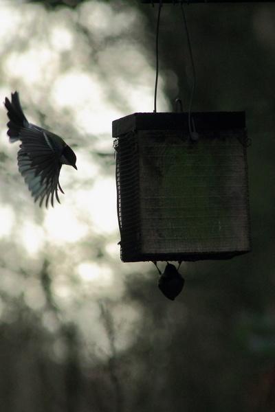 feeder landing