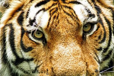 fierce eyes