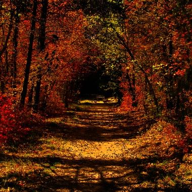The path not taken!