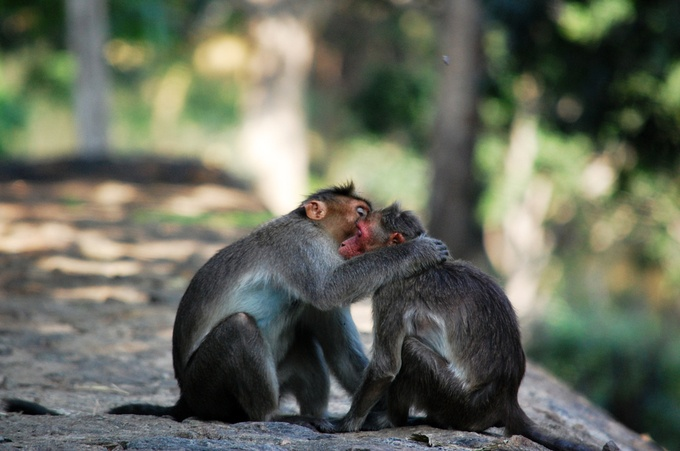 Love by isvivek - Monkeys And Apes Photo Contest