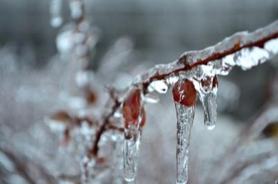 Freezing its berries off!