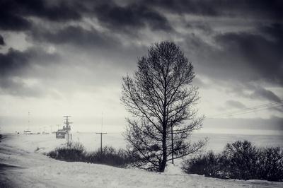 Winter Fell