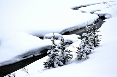Creeks Photo Contest Winners