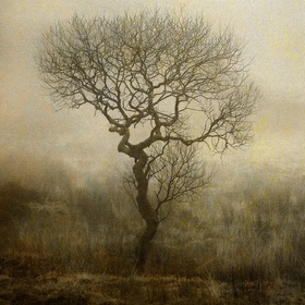 A single isolated tree in the mist