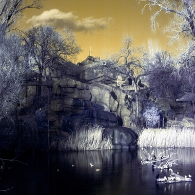 It has been taken in Budapest Zoo with infrared filter.
