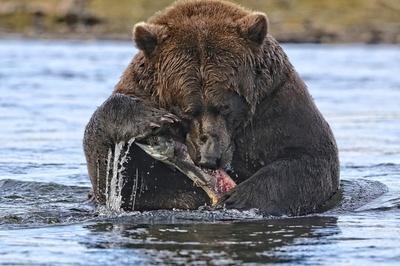 Dinner Time!