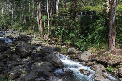 Deep forest hideout