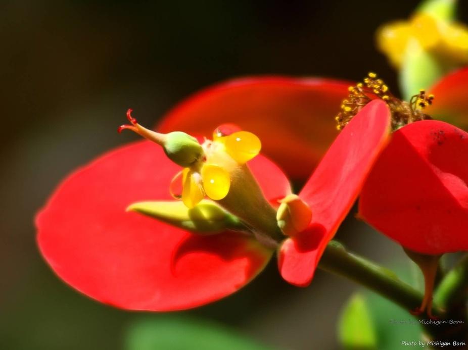 kissing flower