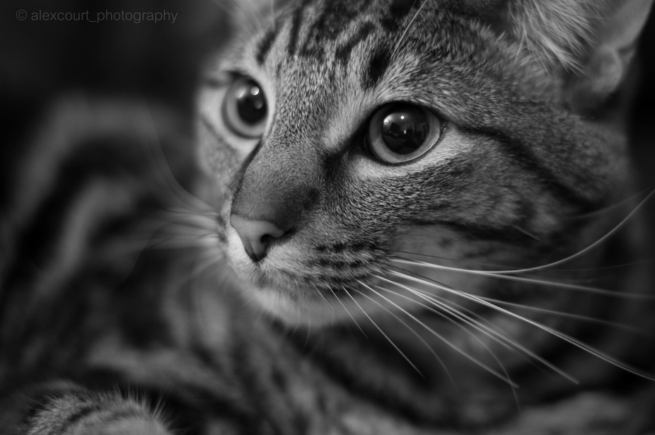My cat Ollie was just chilling out on the sofa on a cold winters evening so i was taking shots of...