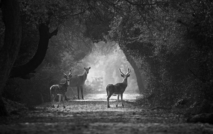 Curious residents by sonalpatil - Epic Black and White Photo Contest