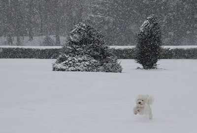 white dog in a snow storm