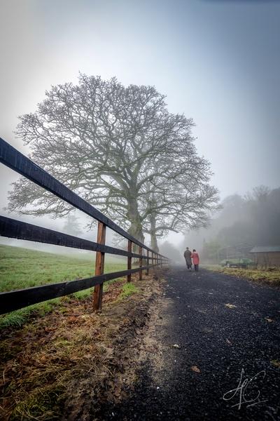 Foggy Walk-2
