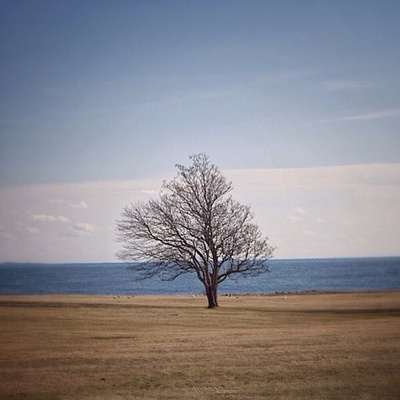 A Tree with an Ocean-view.... Home for The Holidays ------------------------