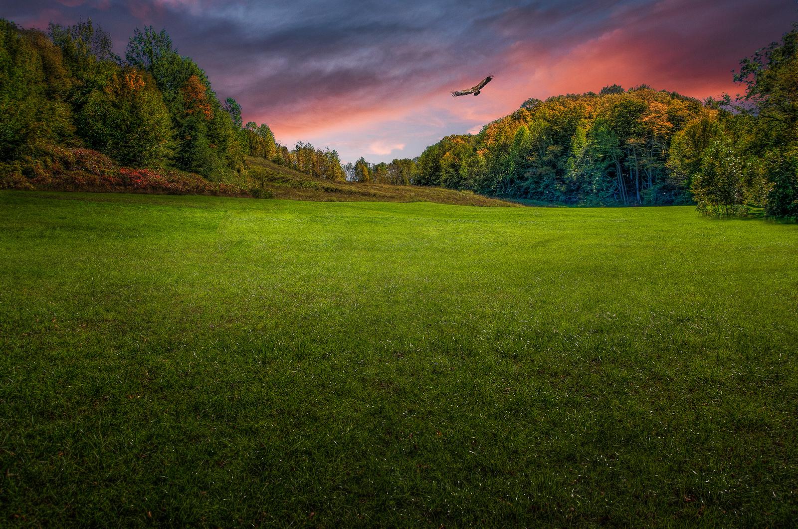 1000 Lawns Photo Contest Winner!